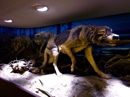 Ужасный Волк - лютоволк